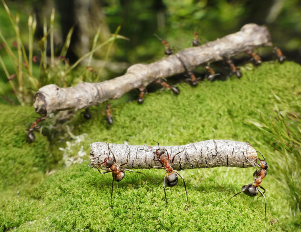 http://www.dreamstime.com/royalty-free-stock-image-team-ants-work-logs-teamwork-image15772486